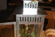 Lantern-Preying-Mantis-House