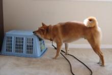 Laundry-Basket-Dog-Game