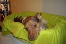 Laundry-Basket-Pet-Car-Seat