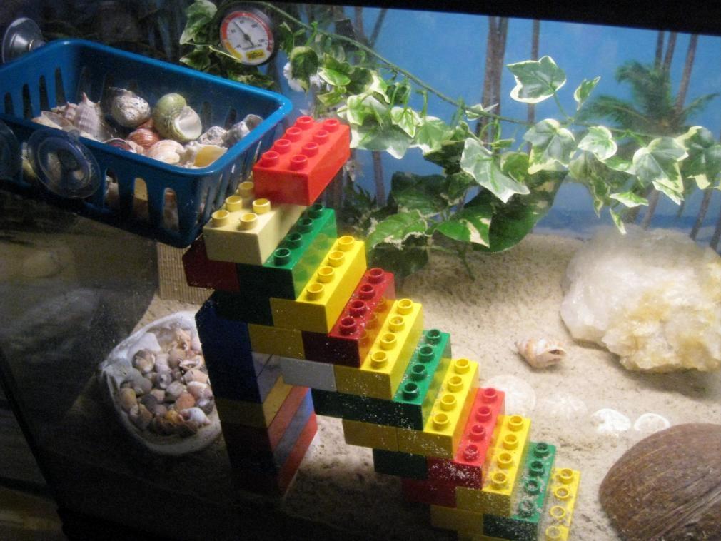 Pet hermit crab tanks - photo#16