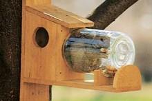Mason-Jar-Squirrel-Feeder