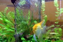 Net-Fish-Tank-Divider