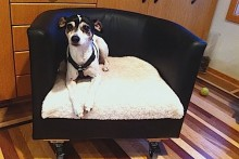 Office-Chair-Dog-Bed