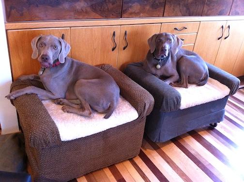 Ottoman Dog Bed Petdiys Com