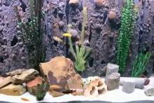 PVC-Aquarium-Cave
