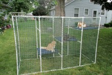 PVC-Cat-Enclosure