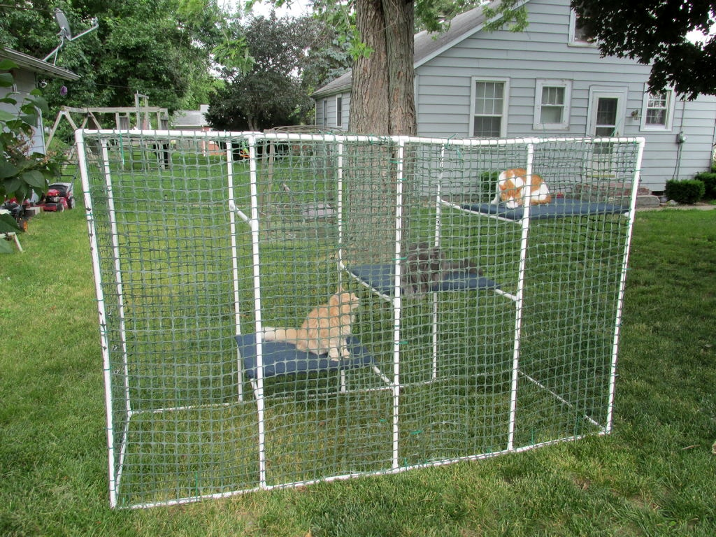 Pvc cat enclosure petdiys