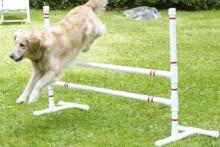 PVC-Dog-Agility-Course