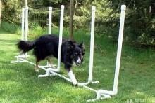 PVC-Dog-Agility-Weave-Poles