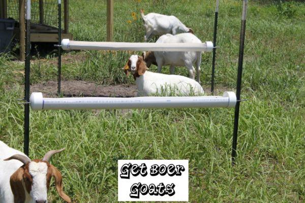 how to build a creep feeder for goats