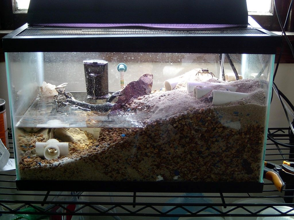 Pvc fiddler crab caves for Connecting fish tanks
