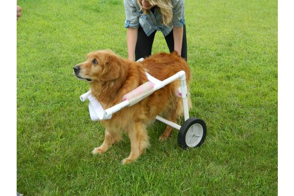 PVC-Rear-Wheelchair