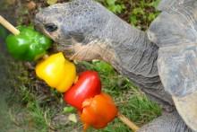 Pepper-Tortoise-Kabob