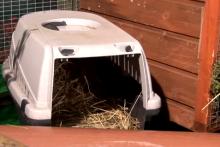 Pet-Carrier-Rabbit-Bathroom