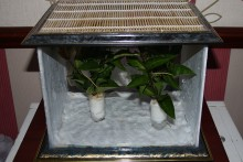 Picture-Frame-Stick-Insect-Cage