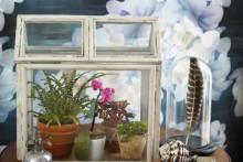 Picture-Frame-Terrarium