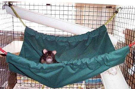 Rat: Rat Hammock