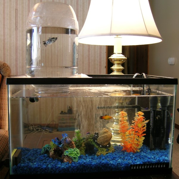 furniture diy aquarium expansion tower expand your aquarium tank with ...