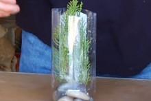Plastic-Bottle-Fish-Tank