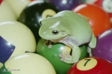 Pool-Ball-Frog-Playground