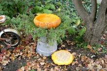Pumpkin-Bird-Bath