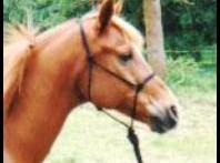 Rope-Horse-Halter