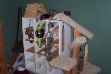 Shoe-Rack-Rat-Playground