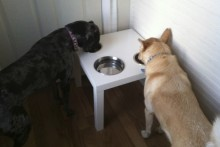 Side-Table-Dog-Diner