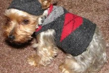 Sock-Dog-Sweater1