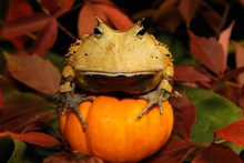 Squash-Perch-Frog-Enrichment
