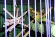 Straw-String-Toy