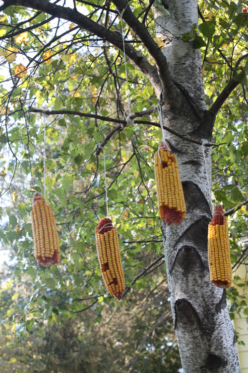 Diy Squirrel Corn Feeder