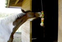 String-Kabob-Horse-Toy