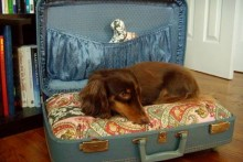Suitcase-Pet-Bed