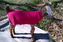Sweatpants-Goat-Kid-Coat
