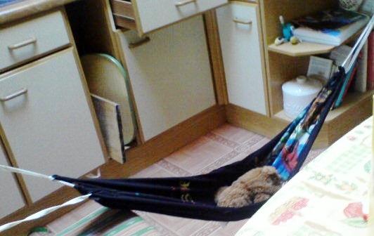 t shirt cat hammock   petdiys    rh   petdiys