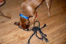 T-shirt Dog Rope Toy