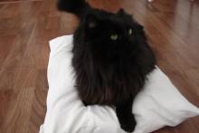 T-shirt-Pet-Bed