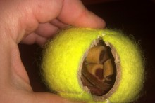 Tennis-Ball-Treat-Dispenser