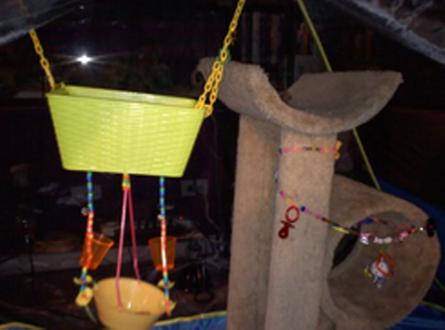 & Tent Sugar Glider Playground - petdiys.com