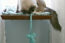 tray cat window perch