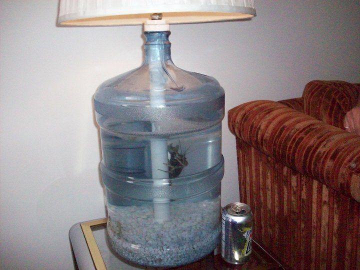 Water Jug Aquarium Lamp Petdiys Com