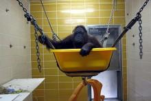 Wheelbarrow-Monkey-Swing