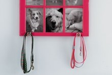 Window-Frame-Leash-Holder1