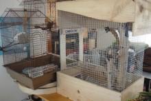 Wine-Box-Bird-Cage