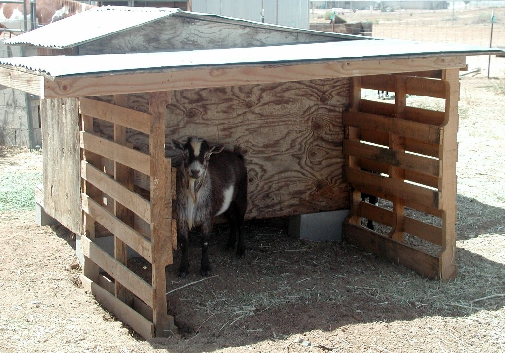 diy wood pallet goat patio