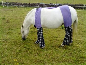 Diy Horse Allergy Trousers Petdiys Com