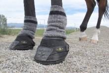 Socks Horse Leg Warmers Petdiys Com