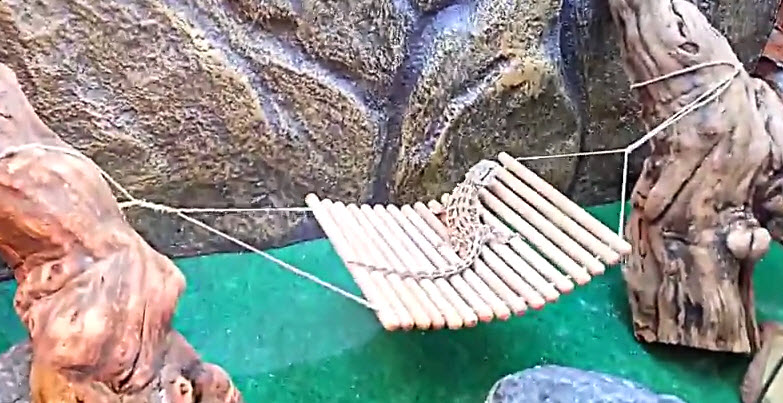 Diy Lizard Hammock Swing Petdiys Com