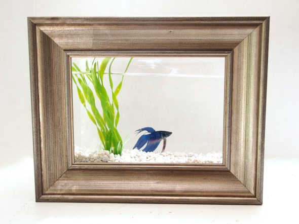 picture frame fish tank